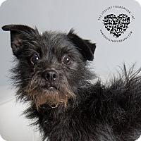 Adopt A Pet :: Rex - Inglewood, CA