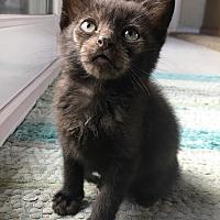 Adopt A Pet :: Mowgli - Orange, CA
