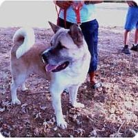 Adopt A Pet :: Samurai - East Amherst, NY
