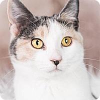 Adopt A Pet :: Sabrina - Eagan, MN