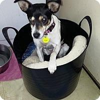 Adopt A Pet :: Tejas - Ft. Collins, CO