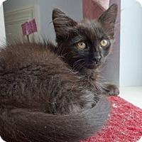 Adopt A Pet :: Spike - Colmar, PA