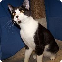 Adopt A Pet :: Dale - Colorado Springs, CO