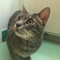 Adopt A Pet :: Gracie - Palo Alto, CA