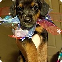 Adopt A Pet :: Maggie-Adoption Pending - Fredericksburg, VA