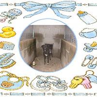 Labrador Retriever Mix Dog for adoption in KELLYVILLE, Oklahoma - BEETLE