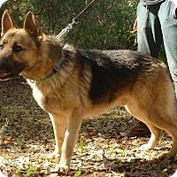 Adopt A Pet :: Sam - Riverview, FL