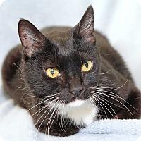 Adopt A Pet :: Rafi Rumbles - Encinitas, CA