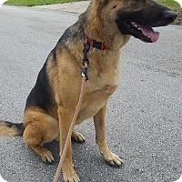 Adopt A Pet :: Miles - ST LOUIS, MO
