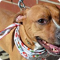 Adopt A Pet :: Ashlyn - Warren, MI