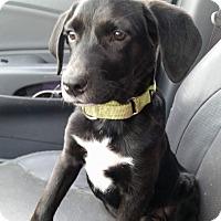 Adopt A Pet :: Casper - SOUTHINGTON, CT