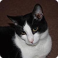 Adopt A Pet :: Opie (LE) - Little Falls, NJ