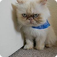 Adopt A Pet :: Moosh Moosh - Beverly Hills, CA