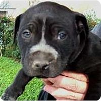 Adopt A Pet :: Jingle - Courtesy post - Glastonbury, CT