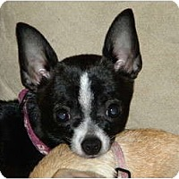 Adopt A Pet :: Molly - Fort Collins, CO