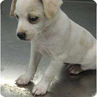 Adopt A Pet :: ID 542 - Plainfield, CT