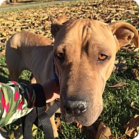 Adopt A Pet :: DASIA - Littleton, CO