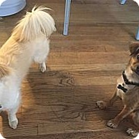 Adopt A Pet :: Gigi & Chris - Van Nuys, CA