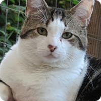 Adopt A Pet :: Pharaoh - Quilcene, WA
