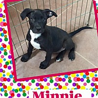 Adopt A Pet :: Minnie - Scottsdale, AZ