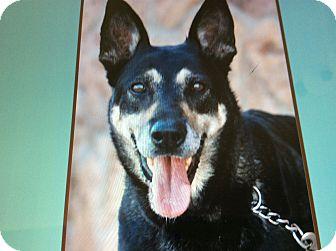 German Shepherd Dog Dog for adoption in Los Angeles, California - LOBA VON LOWENSTEIN
