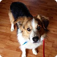 Adopt A Pet :: Gilbert - Sugar Grove, IL