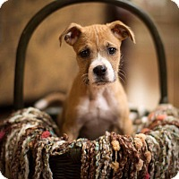Adopt A Pet :: George - New Milford, CT