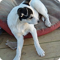 Adopt A Pet :: Padme - Hagerstown, MD