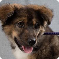 Adopt A Pet :: Hawk - Colorado Springs, CO