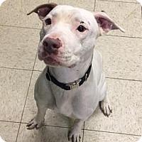 Adopt A Pet :: Mercury - Cleveland, OH