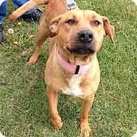 Adopt A Pet :: Annie - Larned, KS