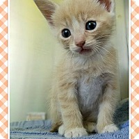 Adopt A Pet :: Lorax - Edwards AFB, CA