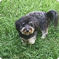 Adopt A Pet :: Zachary - Naples, FL