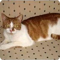 Adopt A Pet :: Rudy - Jenkintown, PA