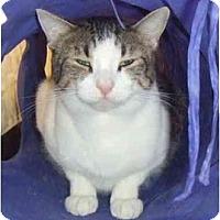Adopt A Pet :: Wemberly - Lake Charles, LA