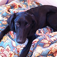 Adopt A Pet :: Chloe - Knoxville, TN