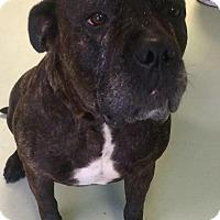 Adopt A Pet :: JUICY - Oswego, IL