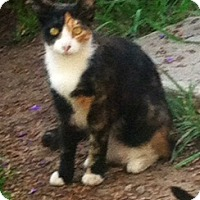 Adopt A Pet :: cami - Encino, CA