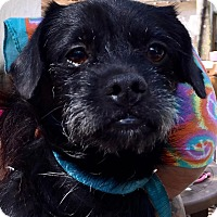 Adopt A Pet :: Juniper - Orlando, FL