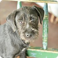 Adopt A Pet :: Trinity - San Antonio, TX