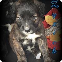 Adopt A Pet :: Zyzick - Denver, NC