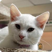 Adopt A Pet :: Philip - Waco, TX