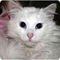 Adopt A Pet :: Hogan - Arlington, VA
