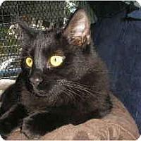 Adopt A Pet :: Annika - lake elsinore, CA