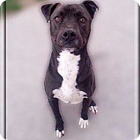 Adopt A Pet :: Tito super friendly - Sacramento, CA