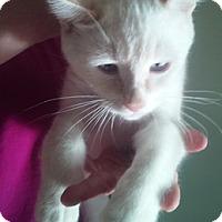 Adopt A Pet :: Bandicoot - North Highlands, CA