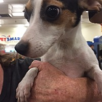 Terrier (Unknown Type, Medium) Mix Dog for adoption in Fresno, California - Becky