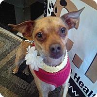 Adopt A Pet :: Penny - Gig Harbor, WA