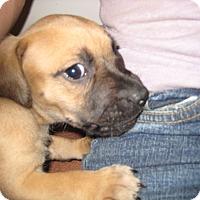 Adopt A Pet :: Austin - richmond, VA
