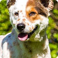 Adopt A Pet :: Freddy - Owensboro, KY
